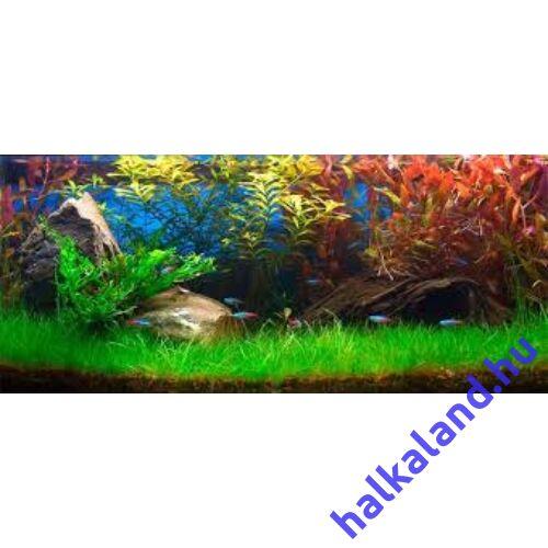 Eleocharis acicularis akváriumi növény